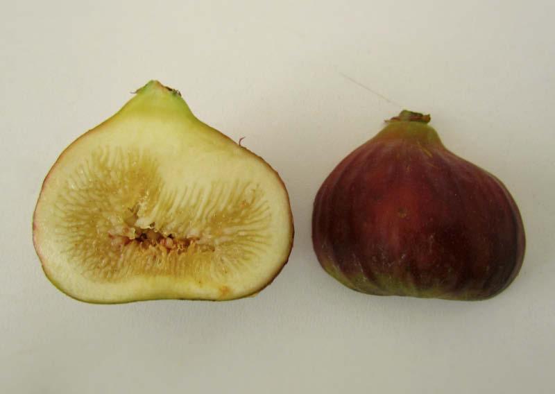 fruto partido higo chato