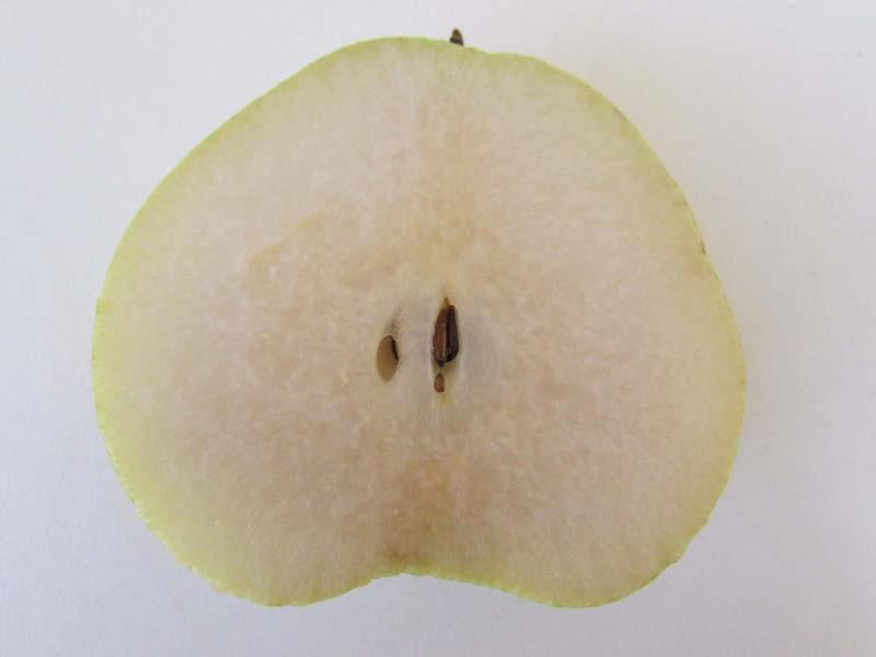 fruto pera almendra