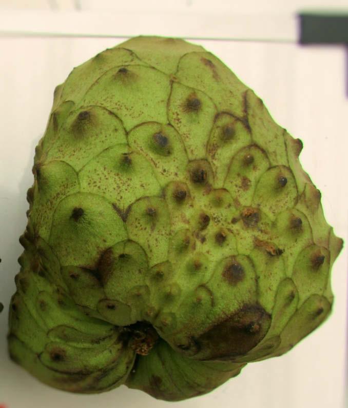 fruto chirimoya