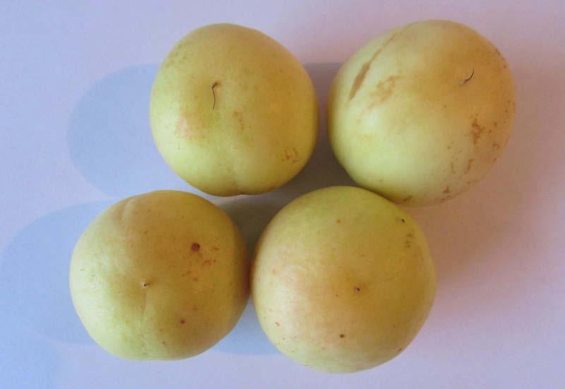 fruto damasco blanco
