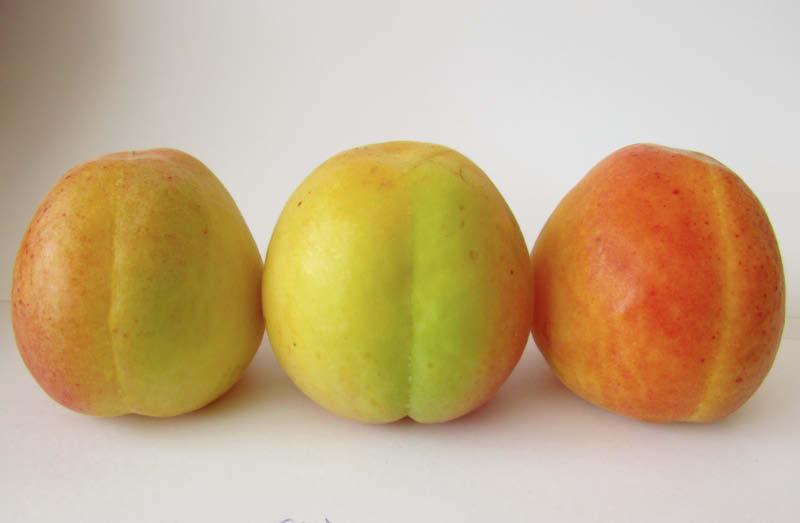 fruto damasco cinzano