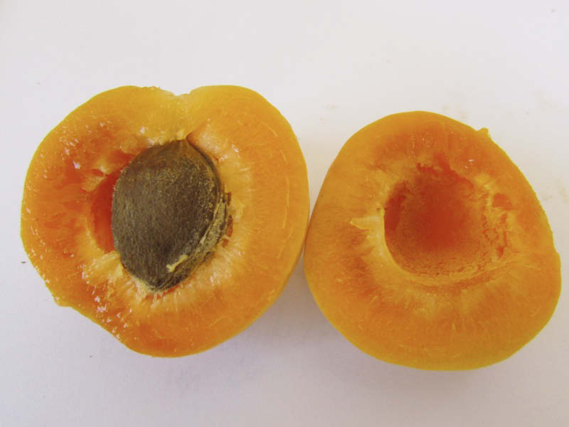 fruto damasco melon