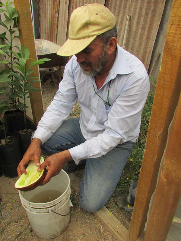 Carlos Castillo berenjena