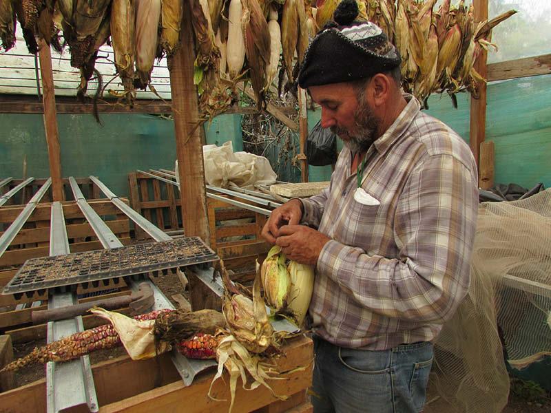 Carlos Castillo maiz