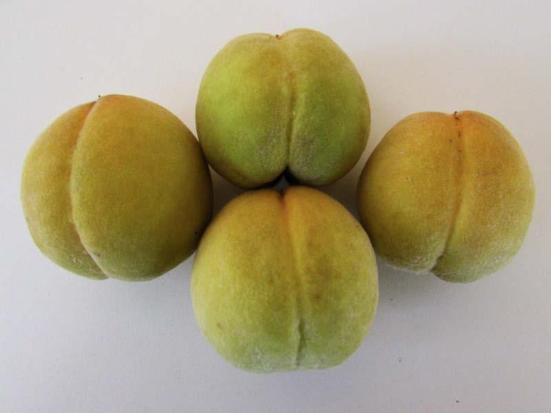 fruto durazno abollado