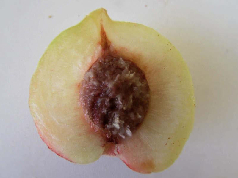 fruto durazno blanco