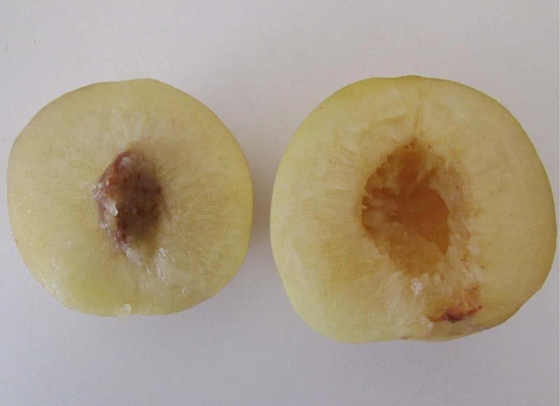 fruto partido durazno blanquillo