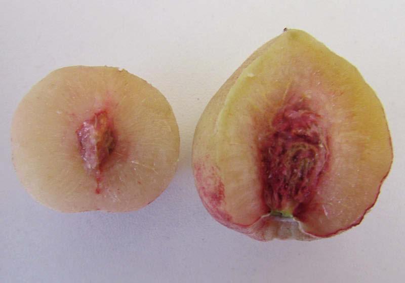 corte fruto durazno virgen