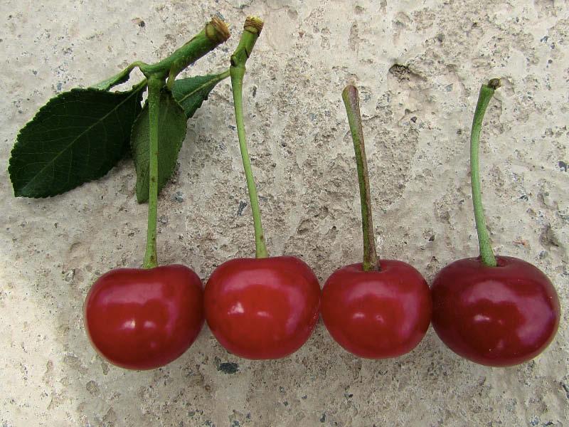 frutos guinda