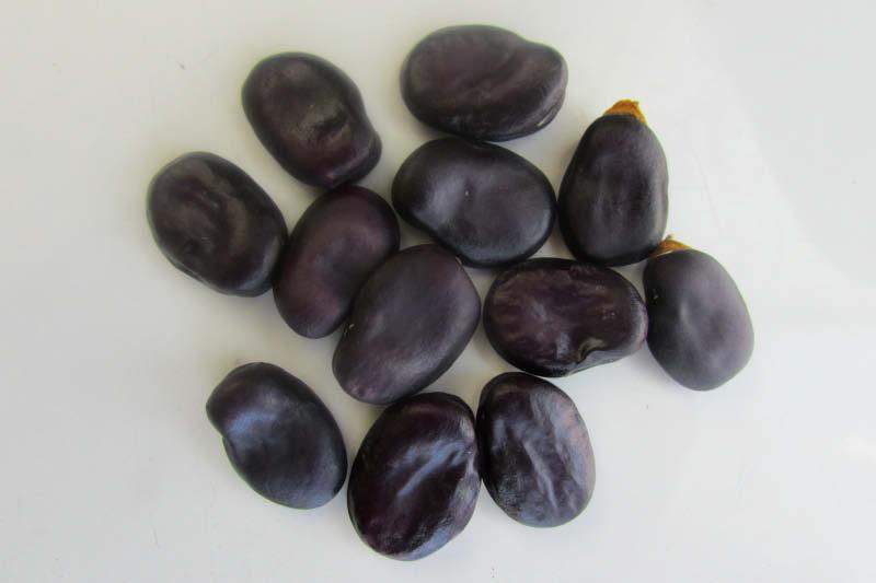 semillas haba morada