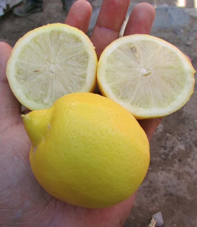 fruto partido lima acida