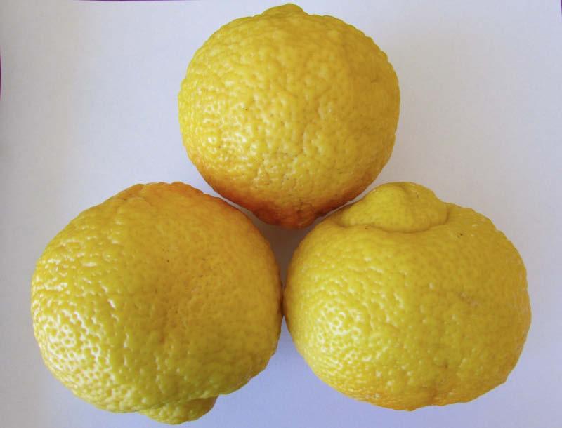 fruto limon cara de vieja