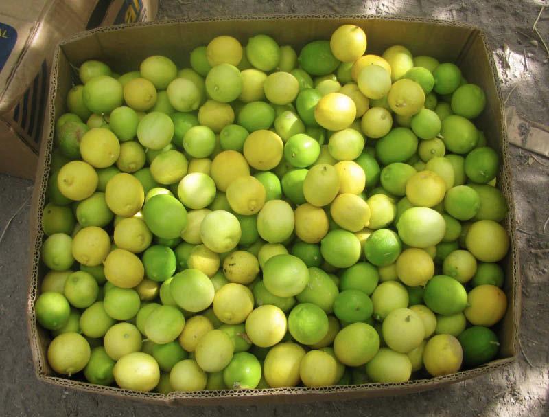 frutos limon sutil