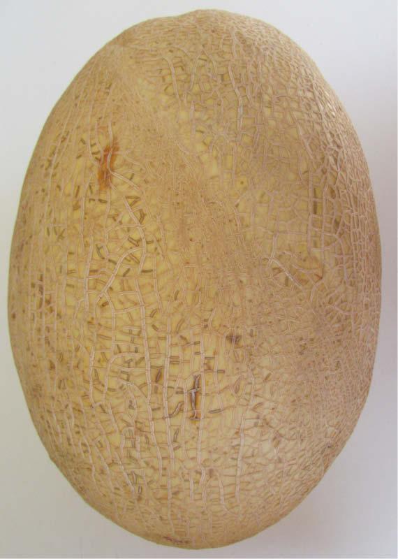 fruto melon escrito blanco
