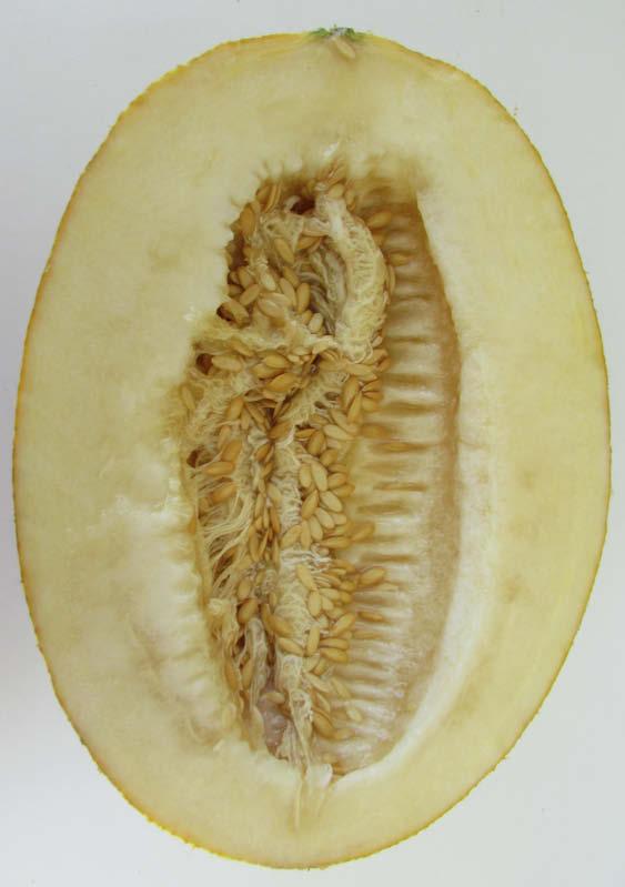 fruto partido melon escrito blanco