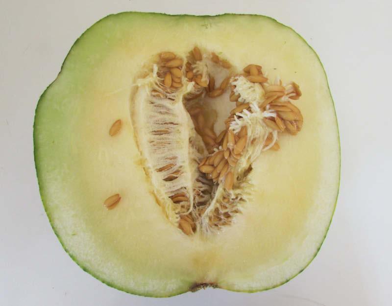 fruto partido melon zapallo