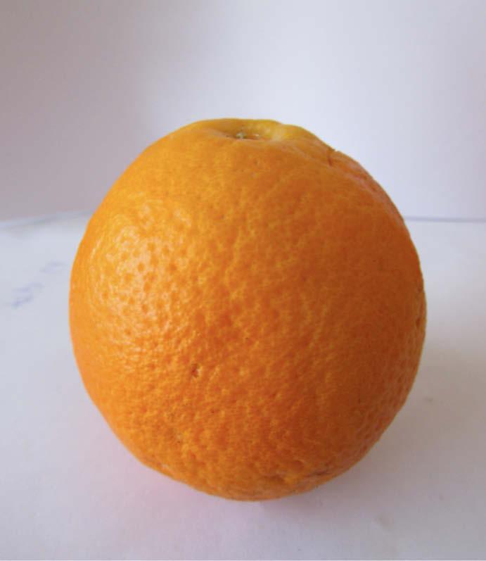 fruto naranja dulce