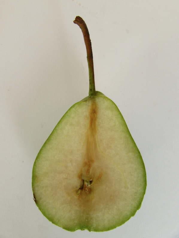 fruto pera armenia
