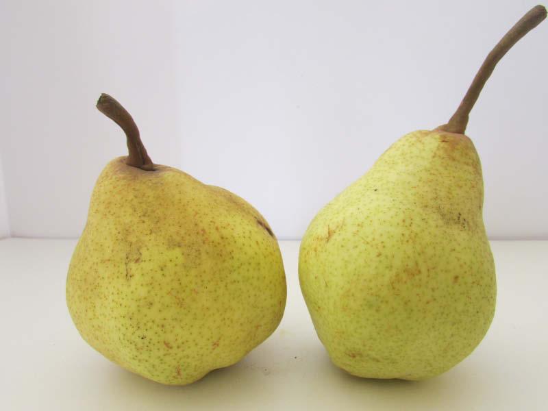 fruto pera chirimoya