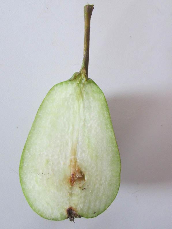 fruto pera cognac