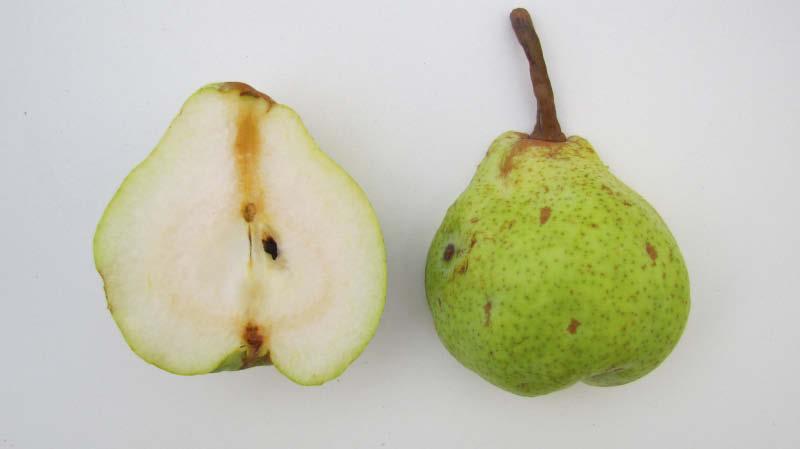 pera manzana fruto