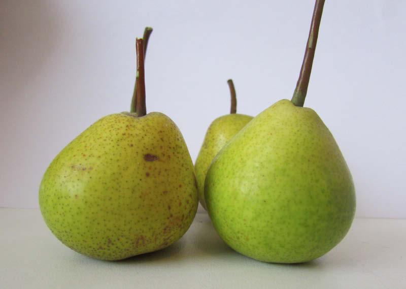 fruto pera de pascua