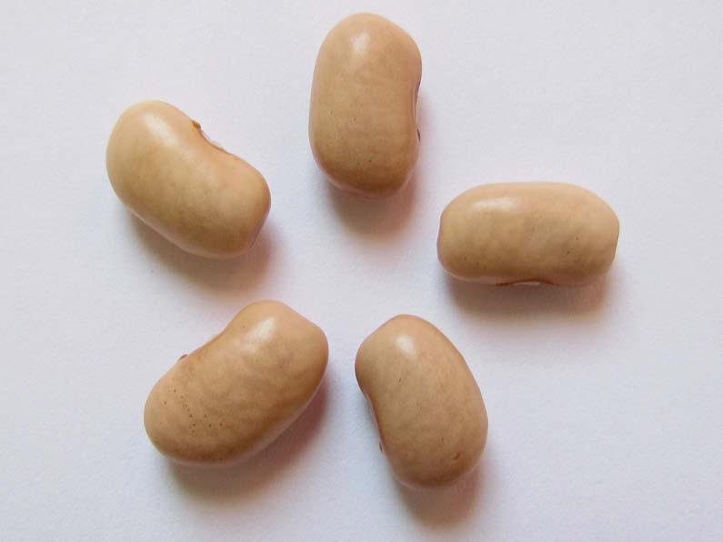 semilla poroto cristal