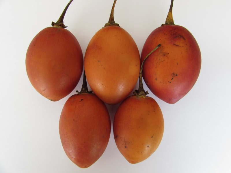 fruto maduro tomate de arbol