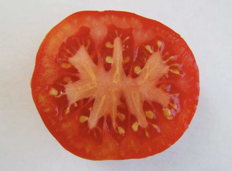 fruto tomate limachino