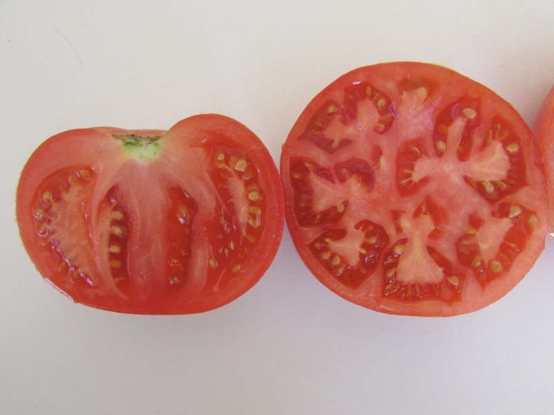 fruto tomate lira