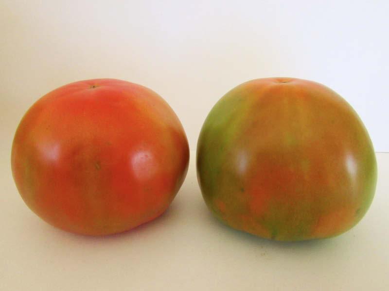 fruto tomate trompo