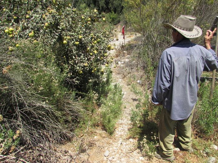 facundo araya olivo